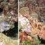 Plongées Antibes murène et chapon