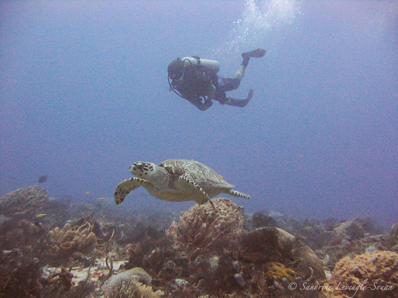 site de plongée Tortuga Mexique