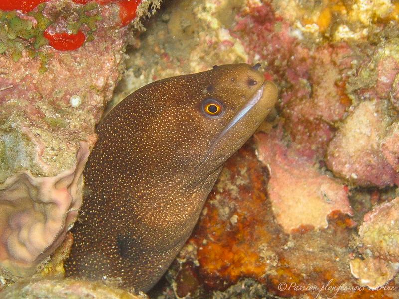 Plongée île de la Dominique