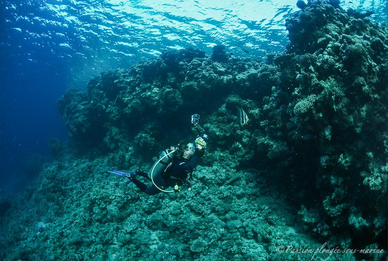 plongée sous-marine en mer Rouge