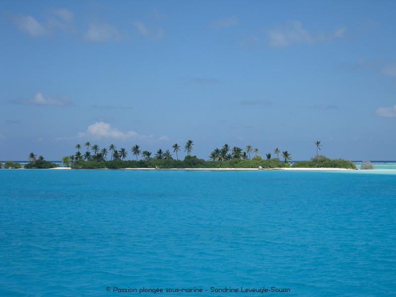 îlot Maldives