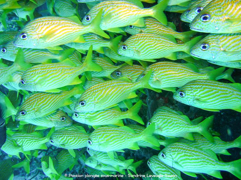 Bancs de poissons Mexique