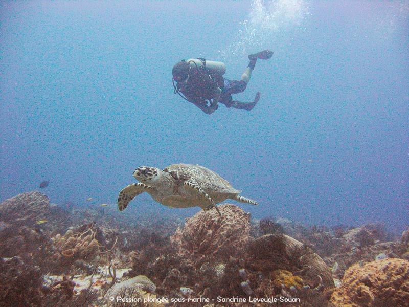 Plongée avec les tortues de Tortuga
