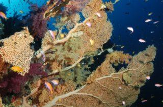 Quand partir plonger en Mer Rouge : d'avril à novembre