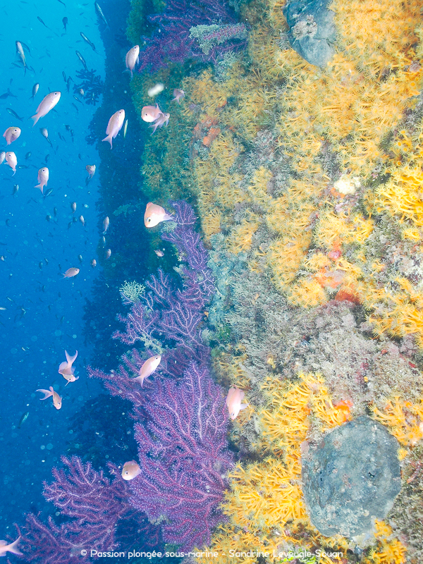 Tombant multicolore plongée Costa Brava