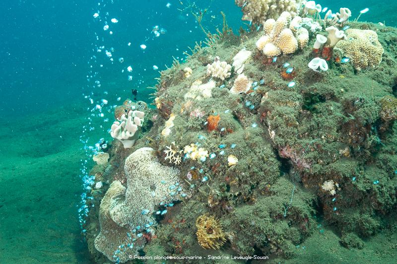 Bubble reef plongée Komodo