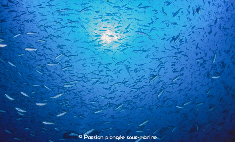 la vie dans le bleu plongée Komodo