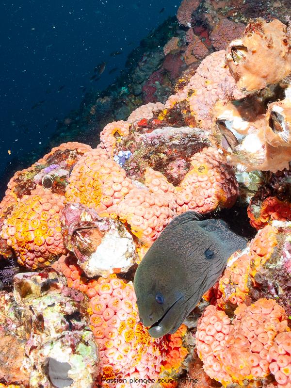 murène plongée Komodo