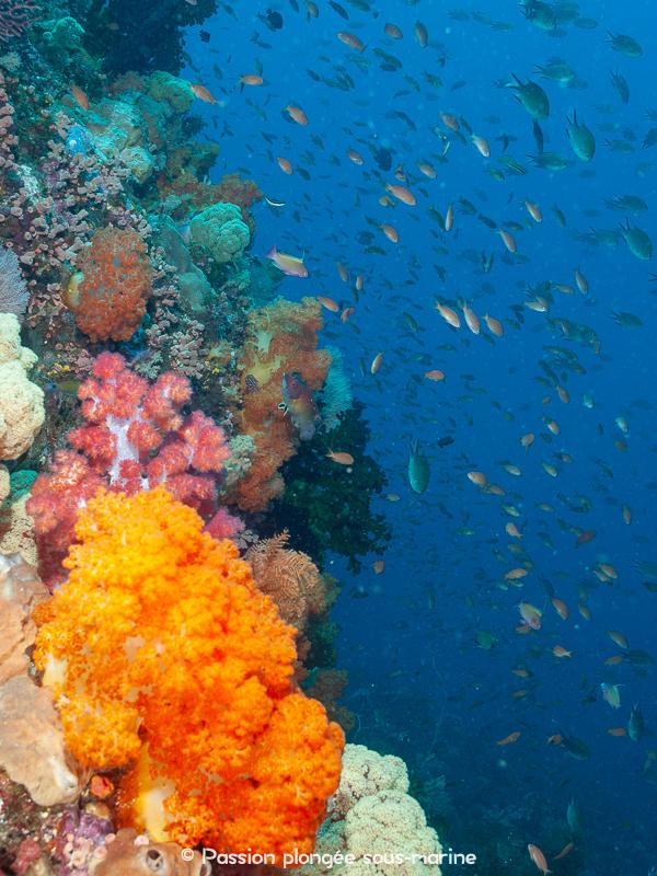 tombant multicolore plongée Komodo