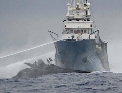 """Sea shepherd – baleiniers japonais : """"nous sommes en guerre"""""""