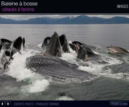photo baleine à bosse Océans