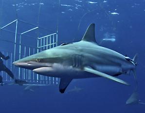 image-docu-requins.jpg