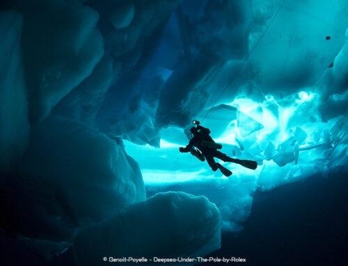 Ushuaïa Nature et Thalassa : la plongée à l'honneur à la télé