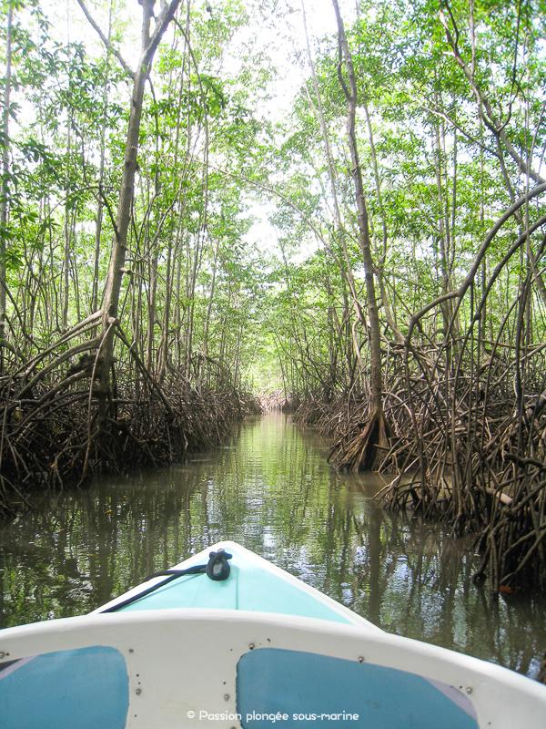 bateau dans mangrove