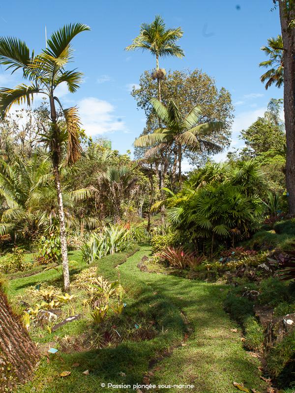 jardin botanique Wilson