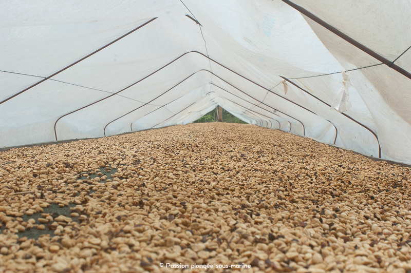 production café Costa Rica