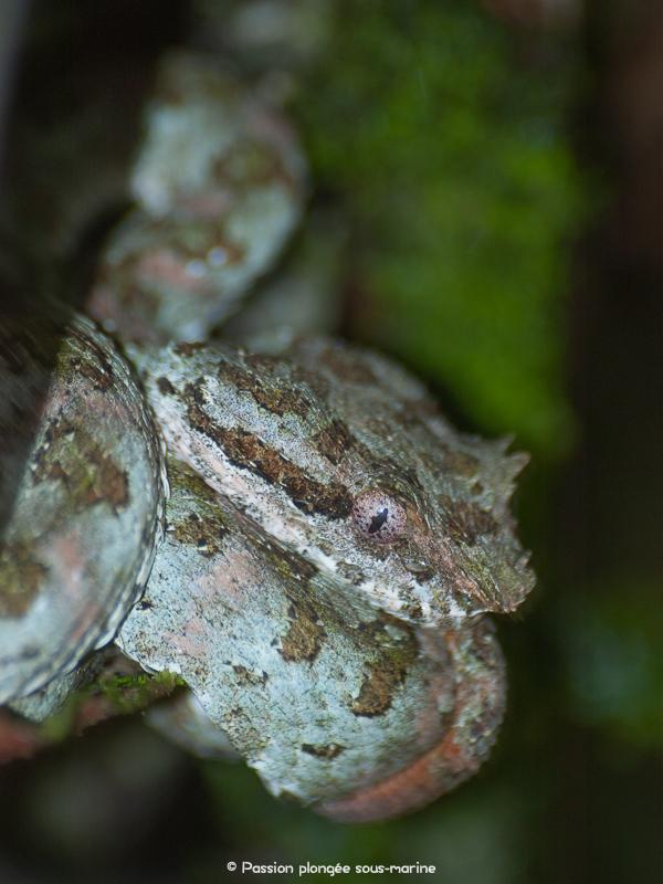 serpent Costa Rica