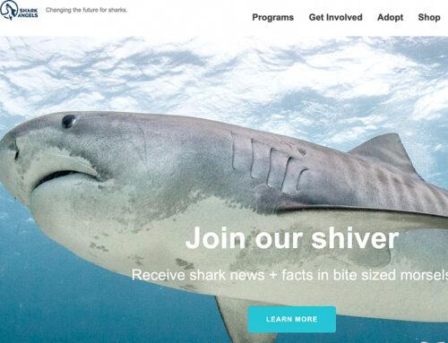 """Des """"shark angels"""" pour la défense des requins"""