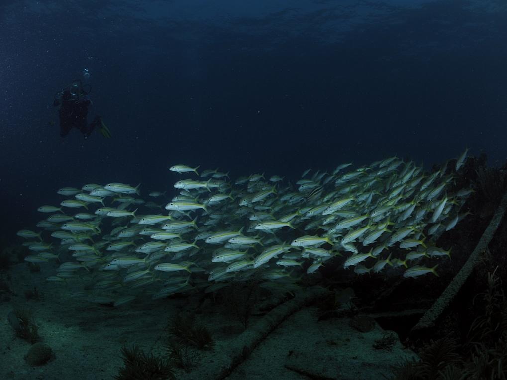 Plongées à Key Largo (Floride) - mai 2011