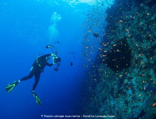 Le salon de la plongée 2012 met les femmes à l'honneur
