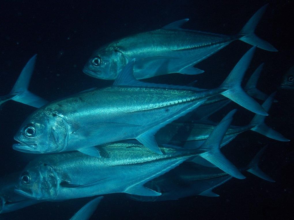 Diaporama d'images prises à Coco en novembre 2010.