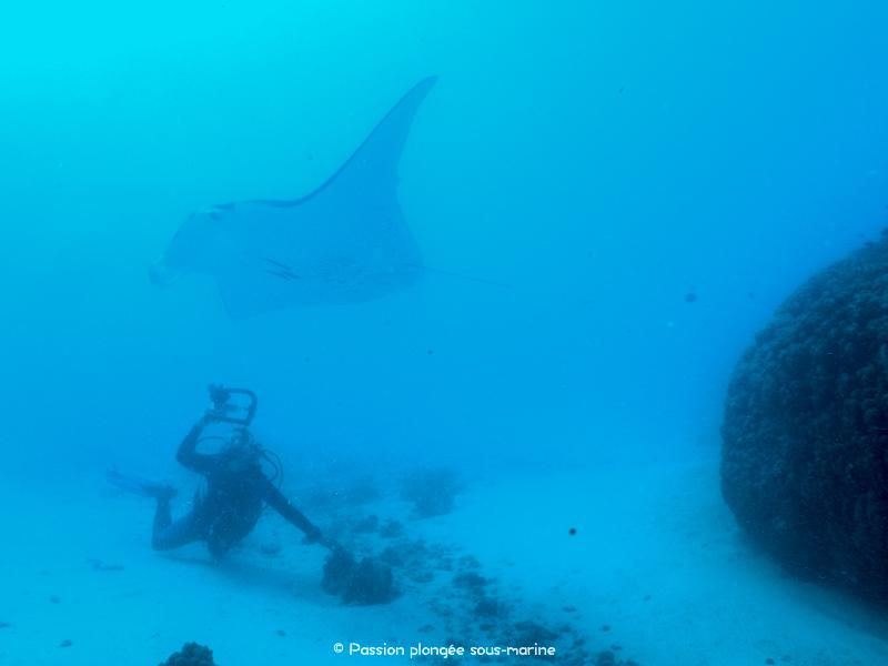 plongée avec raie-manta Maupiti