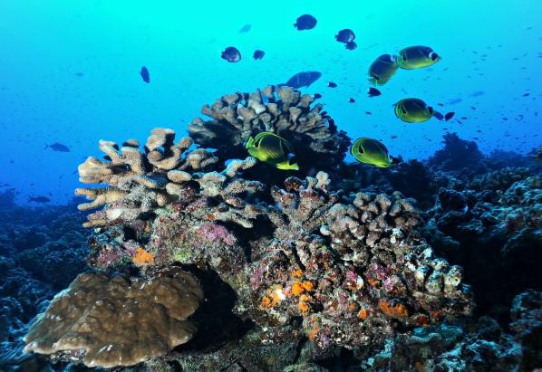 poissons récif corallien