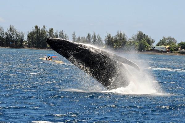 Baleine4