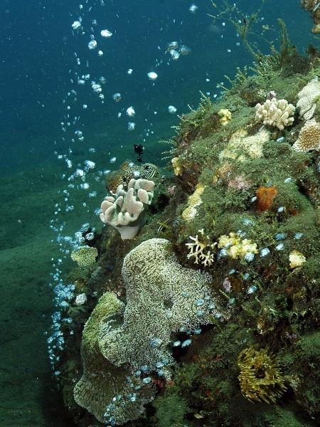 Bubble reef et son activité volcanique
