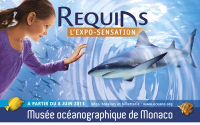 """""""Requins"""", une exposition à découvrir au musée océanographique de Monaco"""