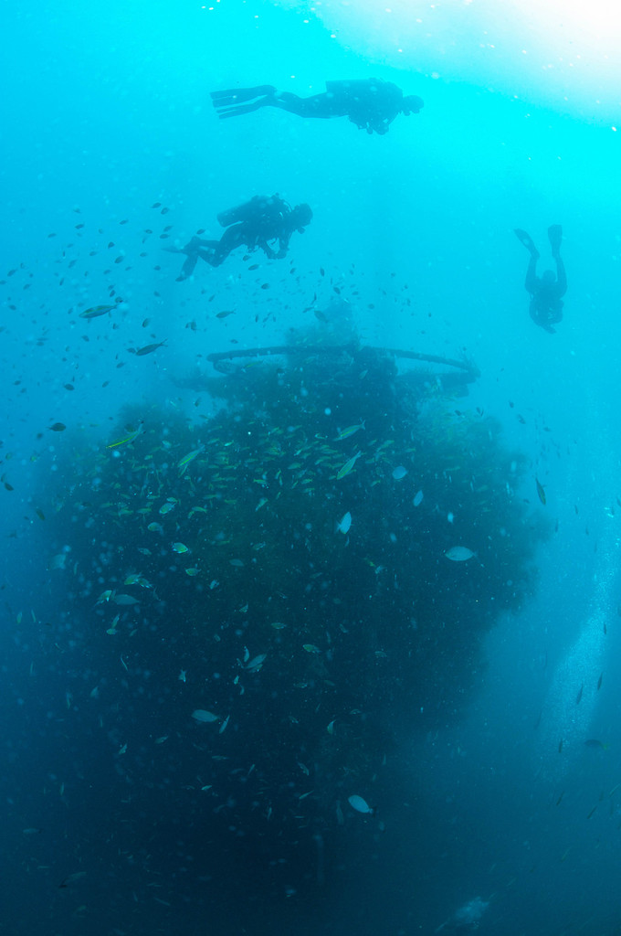 La richesse des fonds sous-marins de Busuanga. Photos Alain Souan.