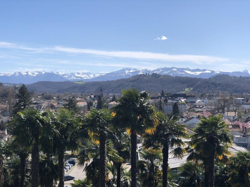 Palmiers et chaîne des Pyrénées à Pau