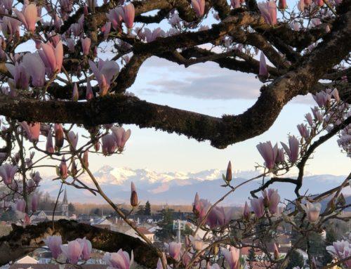 Pau : sur le balcon des Pyrénées